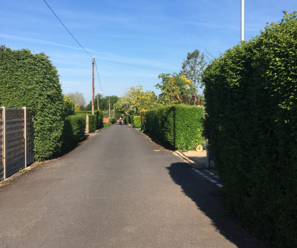 Cycle route signs are obscured by hedge, reposition to other side of road - Barneshall Ave